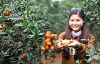 Du thuyền Hòa Bình – vườn Cam Cao Phong